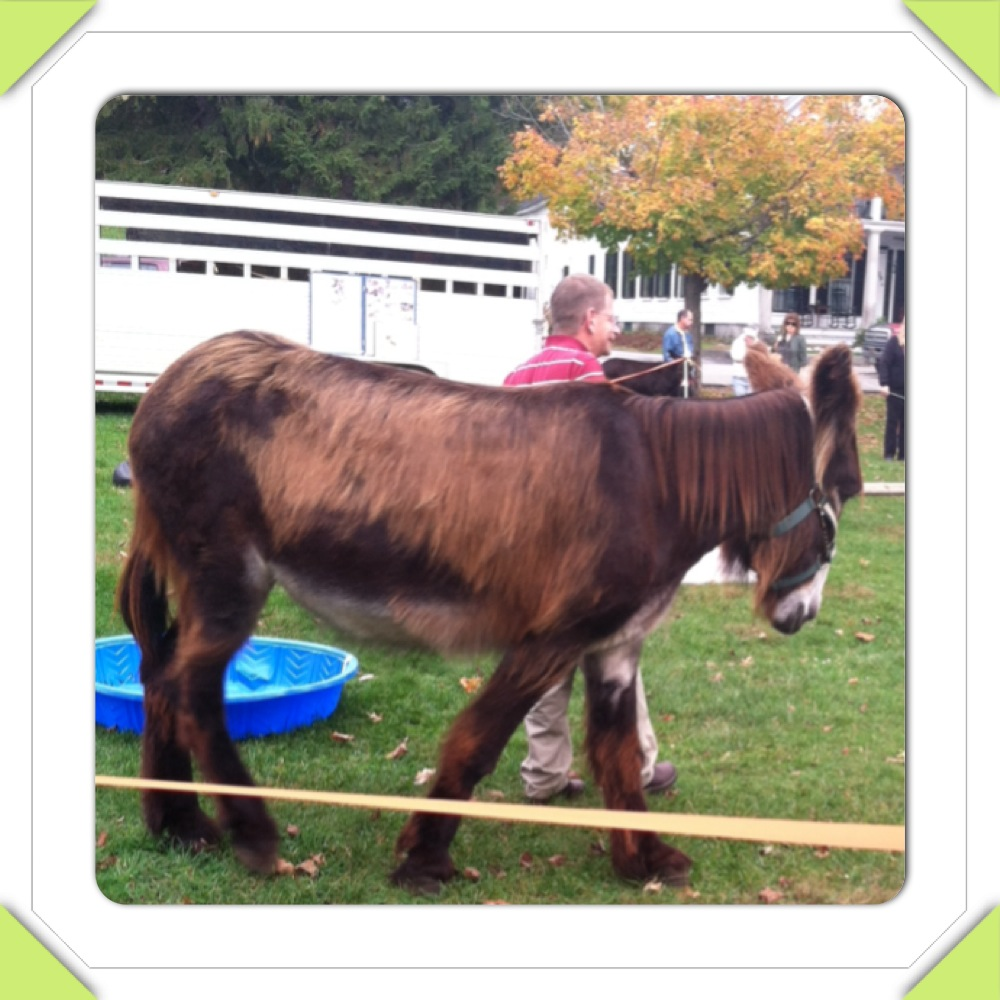Mammoth Donkey at Farmers Market