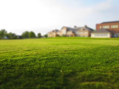Common Lawn Problems and What You Can Do About Them