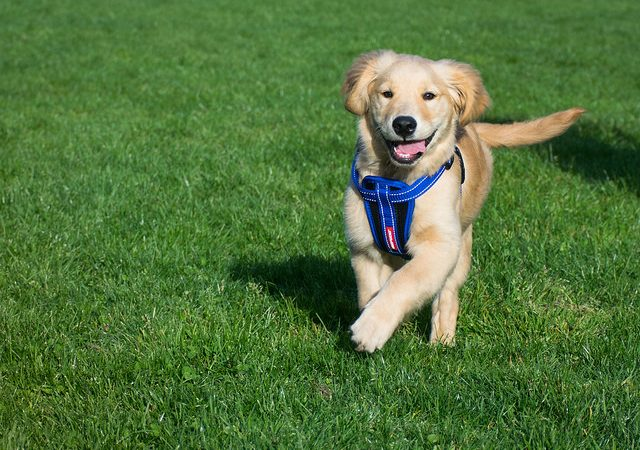 5 Ways a Dog Can Make Your Life Happier