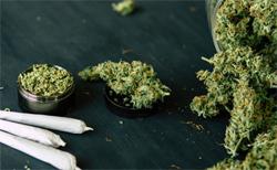 Marijuana Drugs