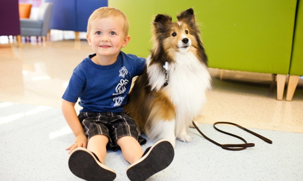 What Is Animal Assisted Therapy?