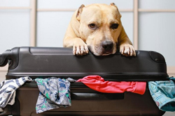 Packing List For Dog