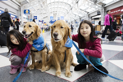 Be Aware of the Rules while traveling with a large dogs