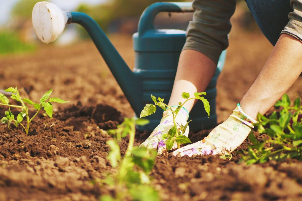 Growing an Organic Garden – What You Need to Know?