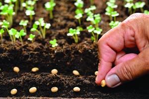Start With Seeding