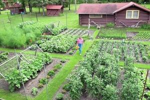Yard is Best for Garden Growing